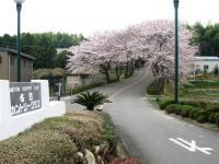 20100411sakura-1.JPG