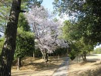20100411sakura-3.JPG