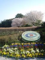 20100411sakura-5.JPG